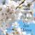 Fête des Mères - pommier en fleurs